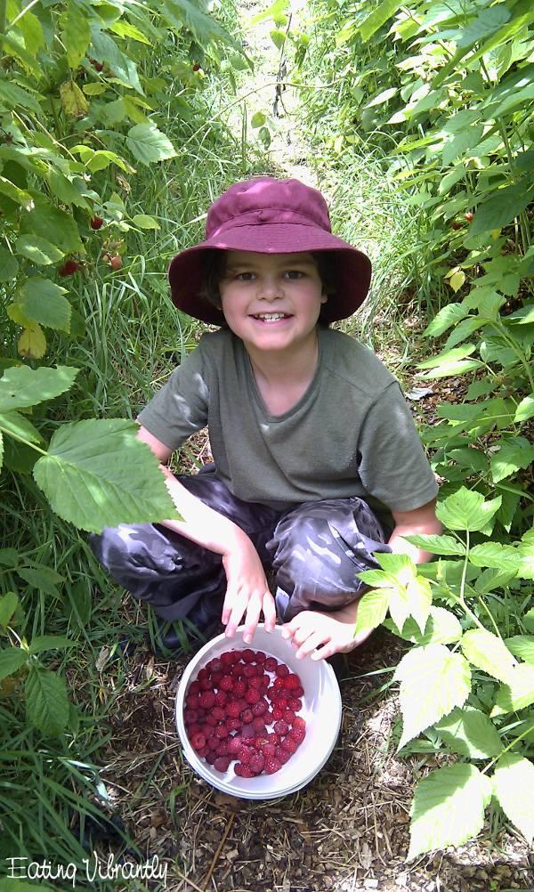 Banana raspberry smoothie - picking berries